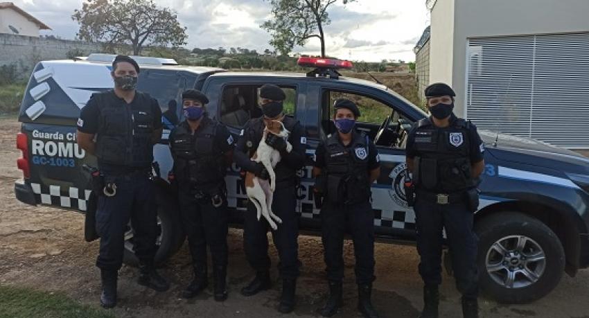Guarda Civil Municipal resgata cães abandonados em residência na Lagoa de Santo Antônio