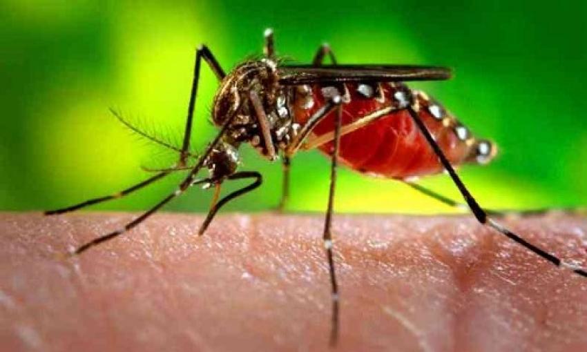 Minas Gerais tem quase 5 mil novos casos prováveis de dengue